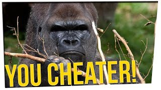 This Gorilla Knows How to CHEAT in Puzz...