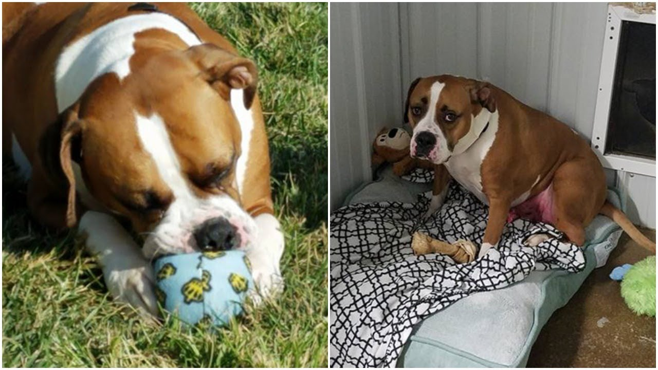 Dog Doesn't Have Long To Live With Cancer But His Friends Are Helping Him Live The High Life