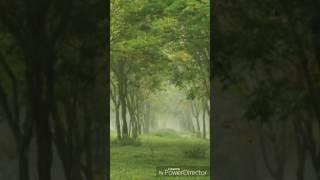 """""""বছর চারেক পর""""( সৃজা ঘোষ) by Swagata Paul"""