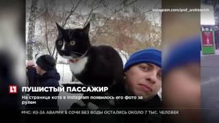 Кот по кличке Граф путешествует на авто из Нижнего Тагила на Байкал