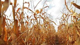 Food Security in a Changing Climate