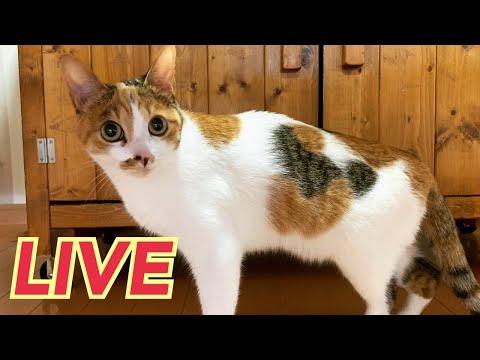第4回ウズネネライブ【LIVE】【Uzu&Nene channel】ウズネネチャンネル