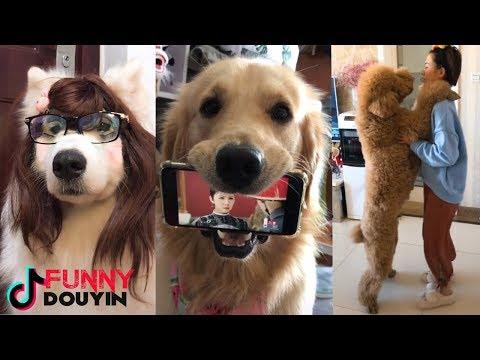 Funny Tik Tok DOG Videos 2018 Tik Tok Douyin 抖音