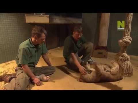 Zoo Juniors - Season 2 Episode 4