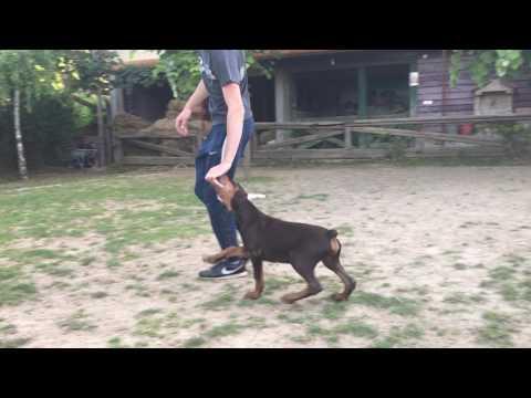 Altobello top quality -video 1