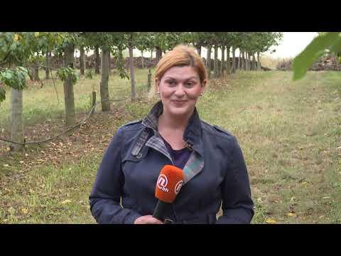 Najveća Plantaža šljive U BiH