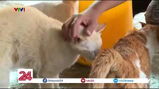 NGƯỜI PHỤ NỮ YÊU NHỮNG CHÚ MÈO | VTV24