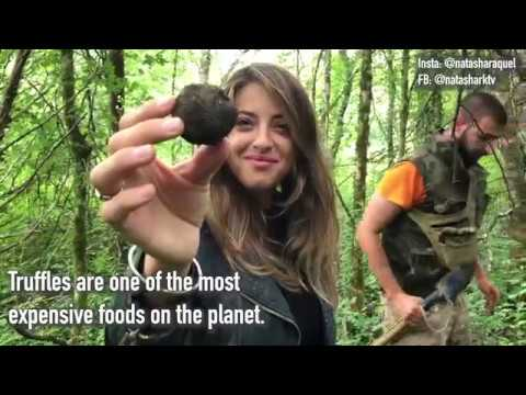 How To Get Rich As A Truffle-Hunter