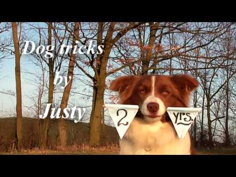 Dog tricks by Justy - 2 years - the border collie