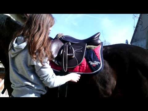 Tutoriel: Seller un cheval correctement