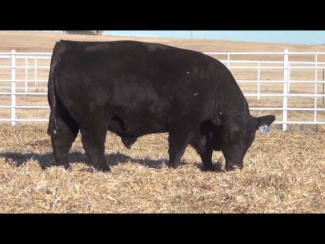 Express Ranches Lot 167