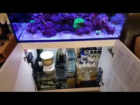 Red Sea REEFER 250 6 months Part 2 Questions  YouTube