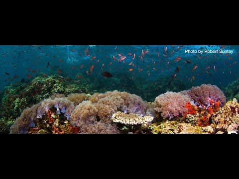 The Heart of Marine Biodiversity: Saving the Verde Island Passage
