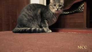 Смешные животные. Смешной кот (#2)
