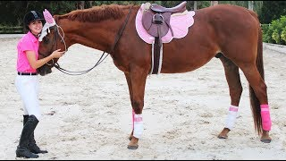 how tall is my horse? barn vlog