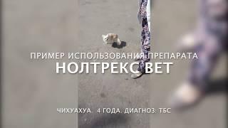 Применение Нолтрекс Вет при лечении артроза у собак