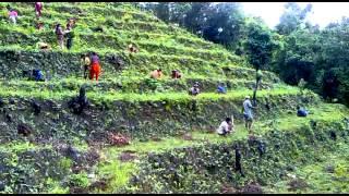 Himalaya Ontop Organic Coffee Estate (pvt) LTD Dhading nepal