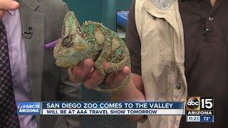 San Diego Zoo in Arizona for AAA Arizona Travel Show