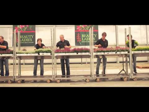 Calluna BEAUTY LADIES® Promotion - DE