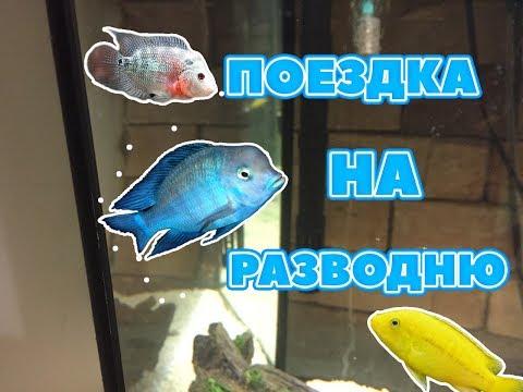 Закупка новой рыбой: Фловер Хорн, Боция клоун, Голубой дельфин, Цихлиды