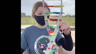 DNA Extraction   Ashlyn Fernandez & Maddie O'Connor