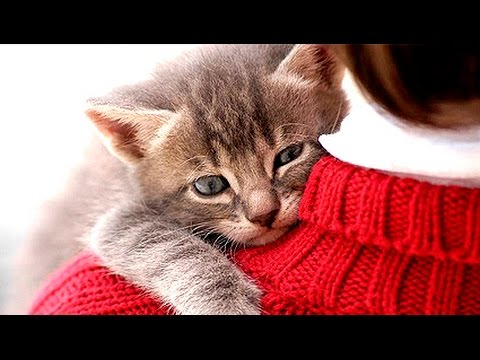 Image result for cats love human