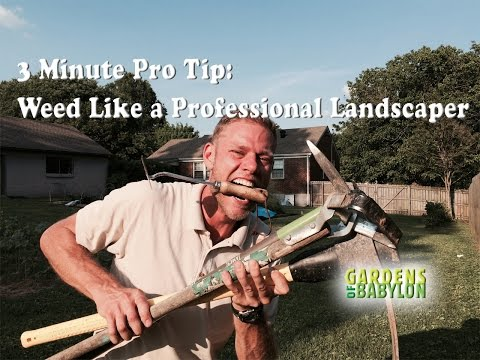 3 Minute Pro Tip : How to Weed Like a Professional Landscaper