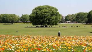 Minako y(龍樹) 音のスケッチ32(お釈迦様の庭) 初夏の昭和記念公園