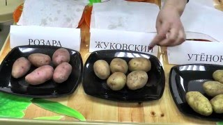Садовые центры Чиполлино. Самый вкусный картофель. Сербские розы. Биф-томаты(Апрель лучшее время для приобретения семенного картофеля! Мы провели дегустацию и выявили самые вкусные..., 2016-04-09T08:15:07.000Z)
