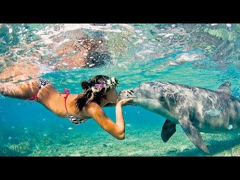 "SeaWorld ""Blue Horizons"" Dolphin Show 2015"