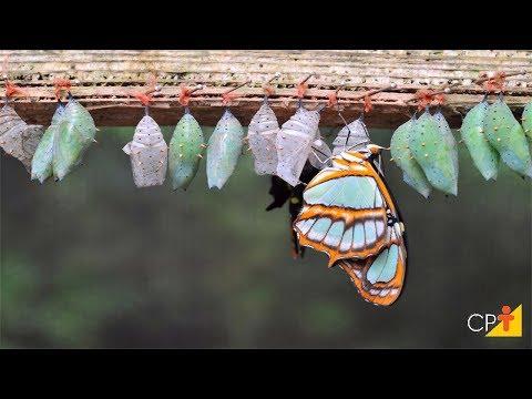 Clique e veja o vídeo Curso Distância Criação de Borboletas - Criação - Cursos CPT