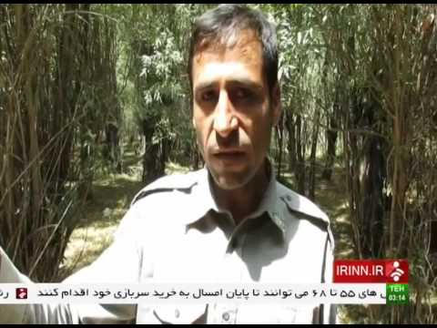 Iran Gandoman wetland تالاب گندمان چهارمحال و بختياري ايران