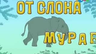 От слона до муравья от Хрюши. 08  Муравьи. Обучающее видео для детей.