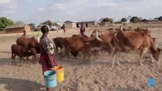 Tanzanie : Mariages forcés subis par des jeunes filles