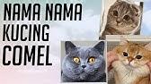 Baru Nama Kucing Yang Bagus Dalam Islam Nama Anak Kucing Perempuan Betina Cantik Lucu Awalan A Youtube