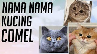 Nama Nama Kucing Yang Comel Youtube