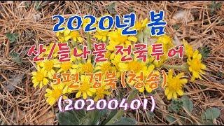 #2020년 봄 산나물/들나물 전국투어 5편.경북(청송…
