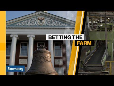Harvard Endowments Bet the Farm on Brazil