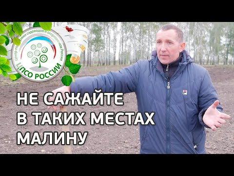Не сажайте малину в таких местах. Где лучше посадить малину. | выращивание | посадить | открытый | посадка | агроном | сажать | россии | огород | малины | малину