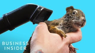 What It Takes To Be A Taxidermist
