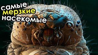Самые мерзкие насекомые в мире | ТОП 10 самых противных и опасных насекомых в мире
