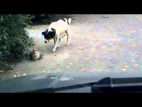 Мужик показал дорогу коте