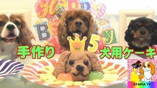 手作り犬用ケーキの作り方 元の動画はこちらです https://youtu.be/QE00...