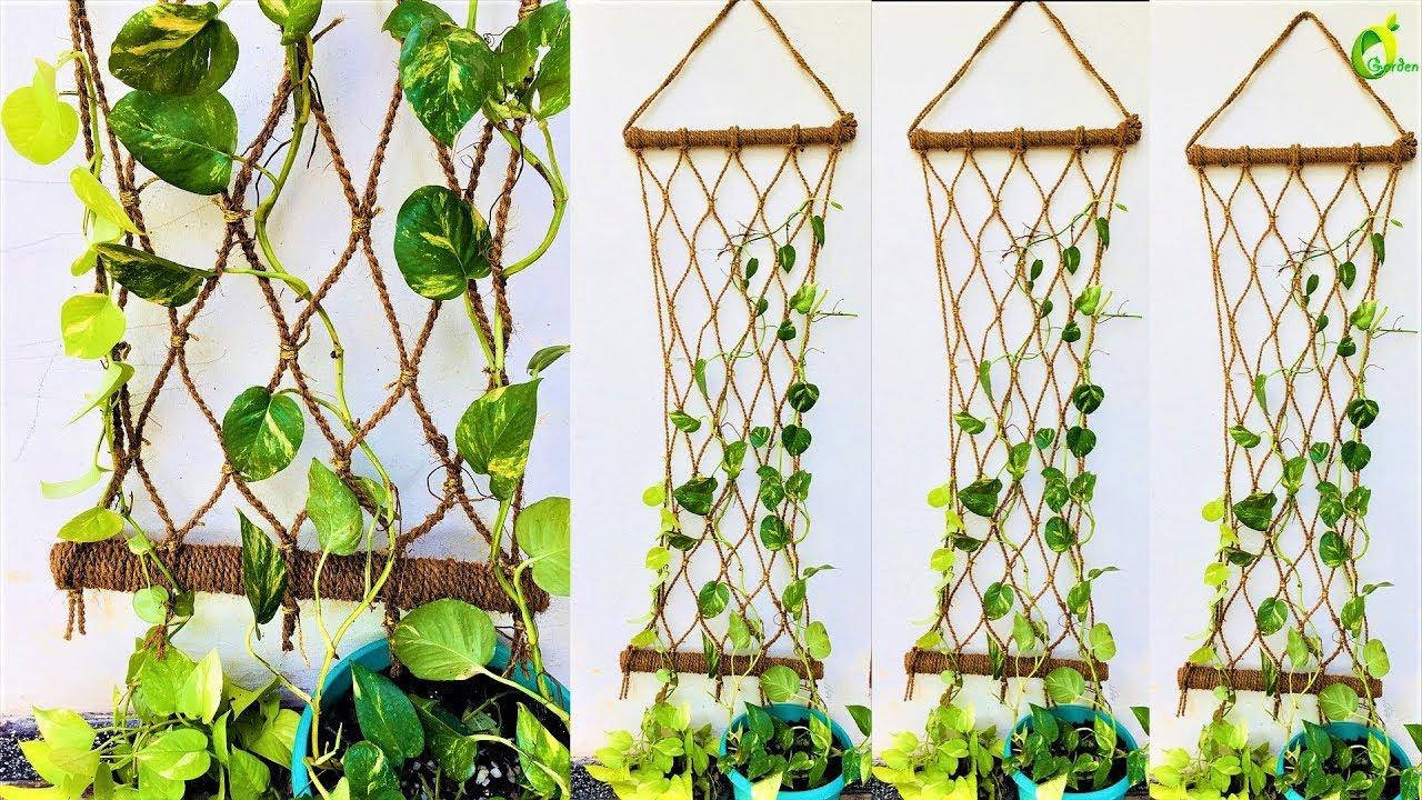 Money Plant Money Plant Growing Style Money Plant Wall