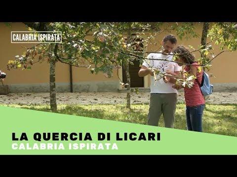 #calabriaispirata 1 / La quercia di Licari