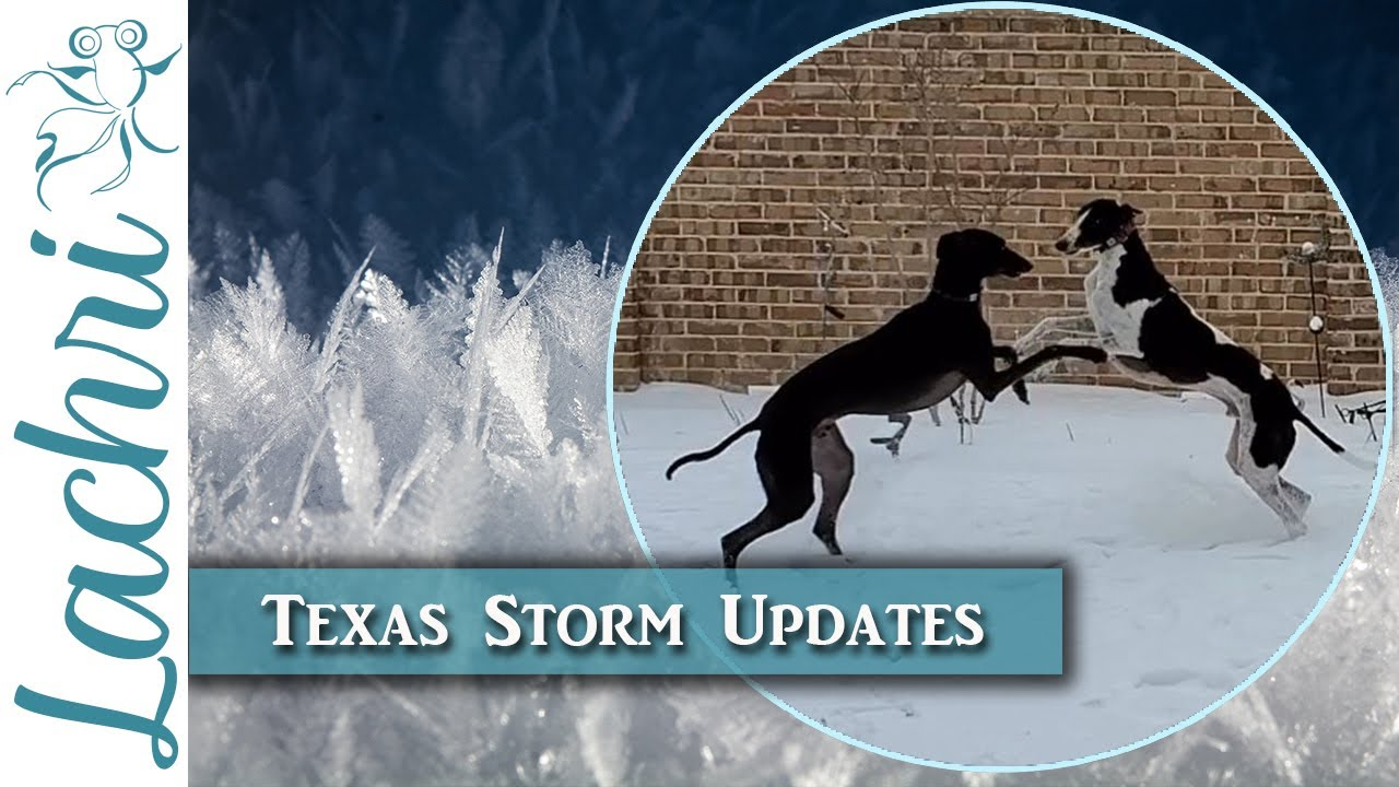 My Texas Storm 2021 experience and updates