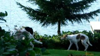 Pups On Plateau Above Lake