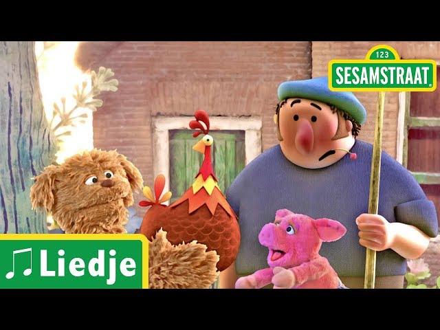 Boer wat zeg je van mijn kippen - Kinderliedje - Sesamstraat