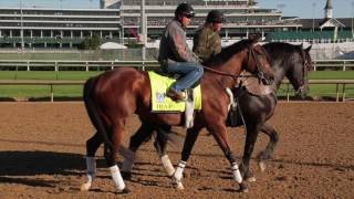 Meet the 2017 Kentucky Derby Contenders