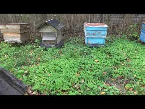 Осенний осмотр пчелиных